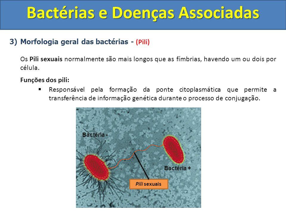 3)Morfologia geral das bactérias - (Pili) Os Pili sexuais normalmente são mais longos que as fímbrias, havendo um ou dois por célula. Funções dos pili