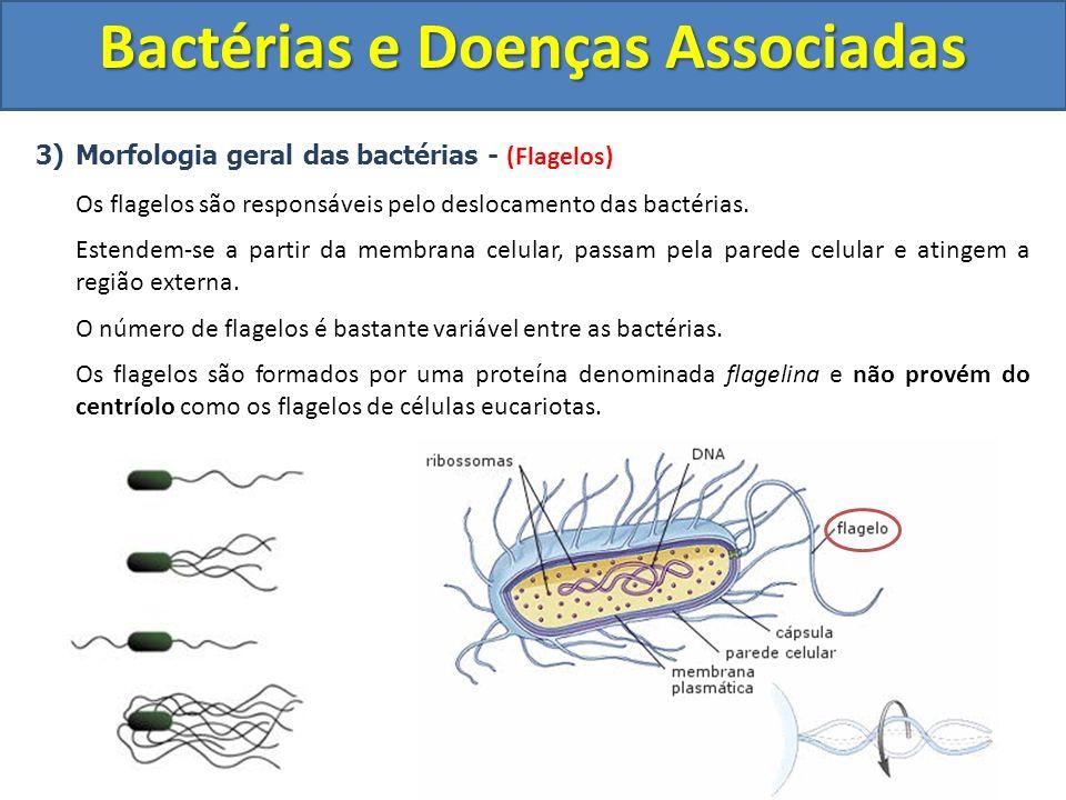 3)Morfologia geral das bactérias - (Flagelos) Os flagelos são responsáveis pelo deslocamento das bactérias. Estendem-se a partir da membrana celular,