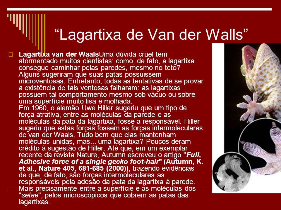 Lagartixa de Van der Walls Lagartixa van der WaalsUma dúvida cruel tem atormentado muitos cientistas: como, de fato, a lagartixa consegue caminhar pel