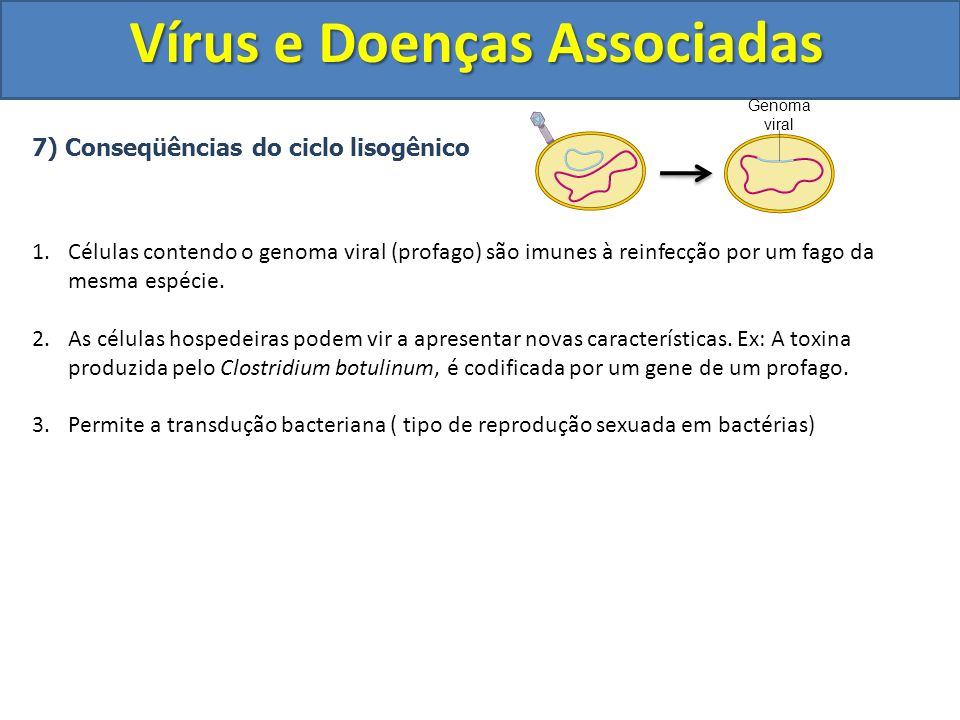 7) Conseqüências do ciclo lisogênico 1.Células contendo o genoma viral (profago) são imunes à reinfecção por um fago da mesma espécie. 2.As células ho