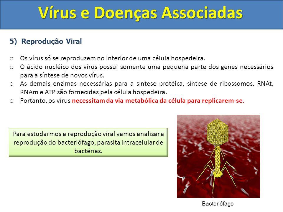 Vírus e Doenças Associadas 5) Reprodução Viral o Os vírus só se reproduzem no interior de uma célula hospedeira. o O ácido nucléico dos vírus possui s