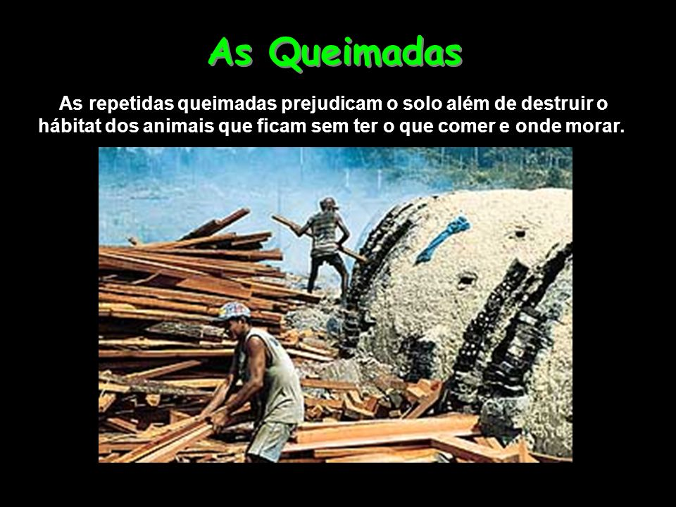 As repetidas queimadas prejudicam o solo além de destruir o hábitat dos animais que ficam sem ter o que comer e onde morar. As Queimadas