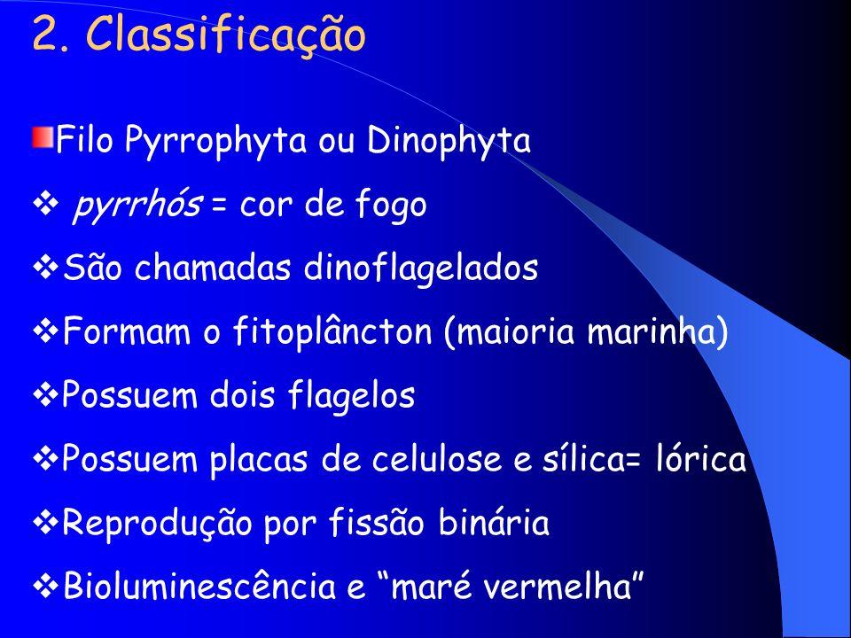 2. Classificação Filo Pyrrophyta ou Dinophyta pyrrhós = cor de fogo São chamadas dinoflagelados Formam o fitoplâncton (maioria marinha) Possuem dois f