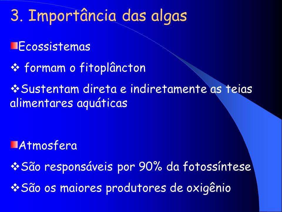 3. Importância das algas Ecossistemas formam o fitoplâncton Sustentam direta e indiretamente as teias alimentares aquáticas Atmosfera São responsáveis