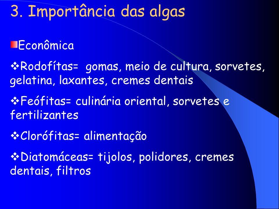 3. Importância das algas Econômica Rodofítas= gomas, meio de cultura, sorvetes, gelatina, laxantes, cremes dentais Feófitas= culinária oriental, sorve