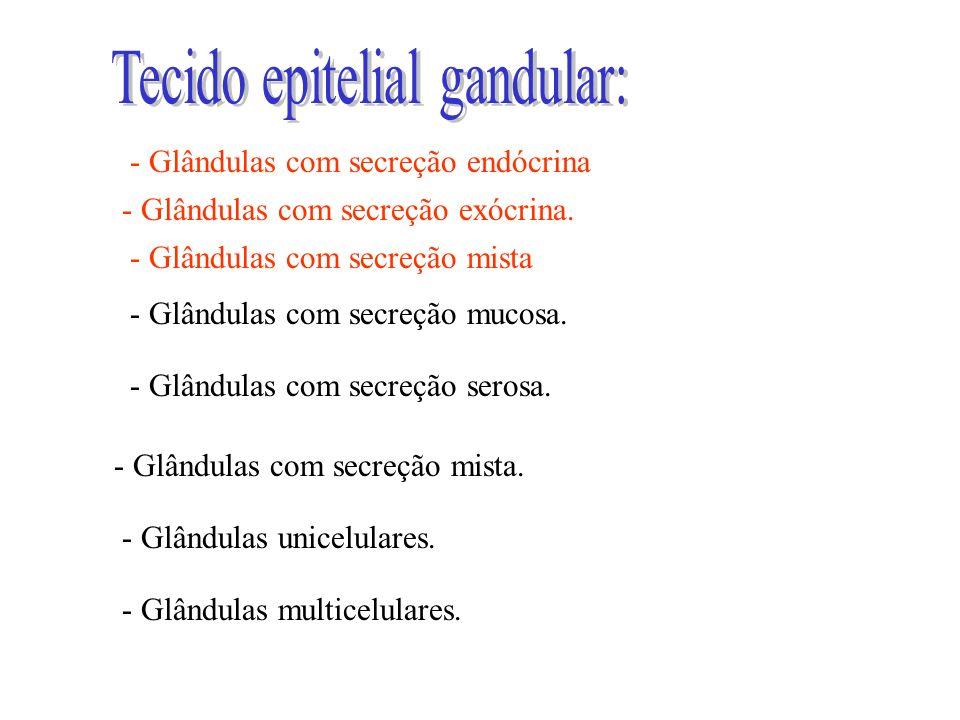 - Glândulas com secreção mucosa. - Glândulas com secreção serosa. - Glândulas com secreção mista. - Glândulas unicelulares. - Glândulas multicelulares