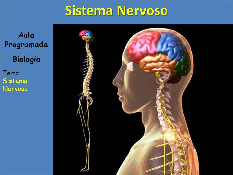 Aula Programada Biologia Tema: Sistema Nervoso