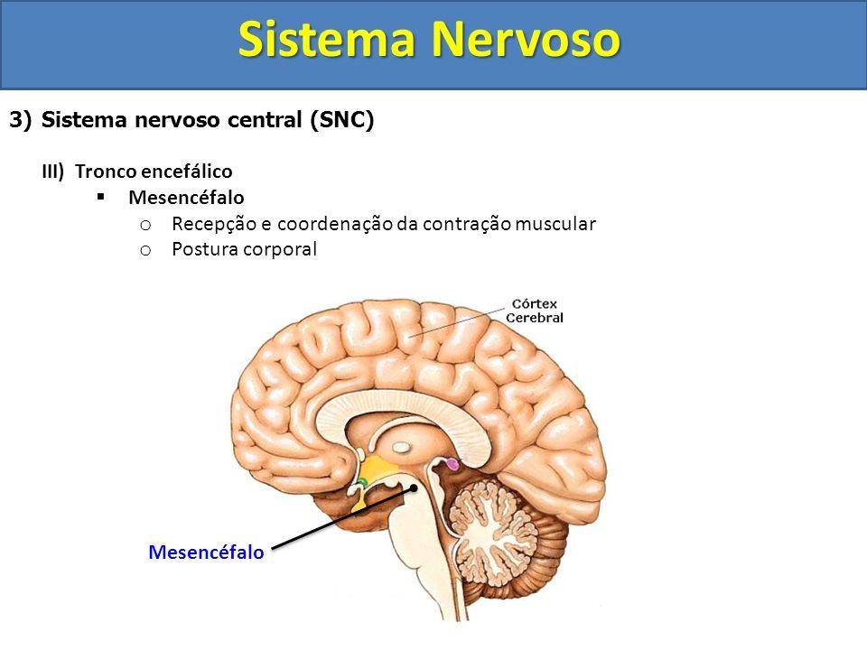 Sistema Nervoso 3)Sistema nervoso central (SNC) III) Tronco encefálico Mesencéfalo o Recepção e coordenação da contração muscular o Postura corporal M