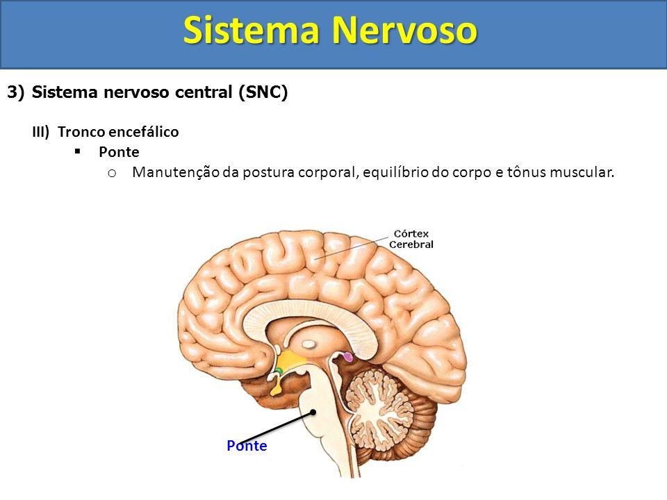 Sistema Nervoso 3)Sistema nervoso central (SNC) III) Tronco encefálico Ponte o Manutenção da postura corporal, equilíbrio do corpo e tônus muscular. P