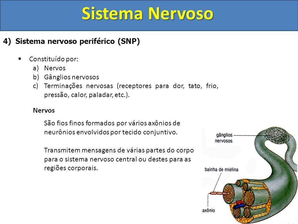 Sistema Nervoso 4) Sistema nervoso periférico (SNP) Constituído por: a)Nervos b)Gânglios nervosos c)Terminações nervosas (receptores para dor, tato, f