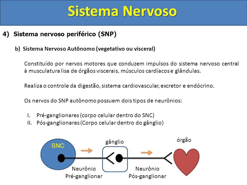 Sistema Nervoso 4) Sistema nervoso periférico (SNP) b) Sistema Nervoso Autônomo (vegetativo ou visceral) Constituído por nervos motores que conduzem i