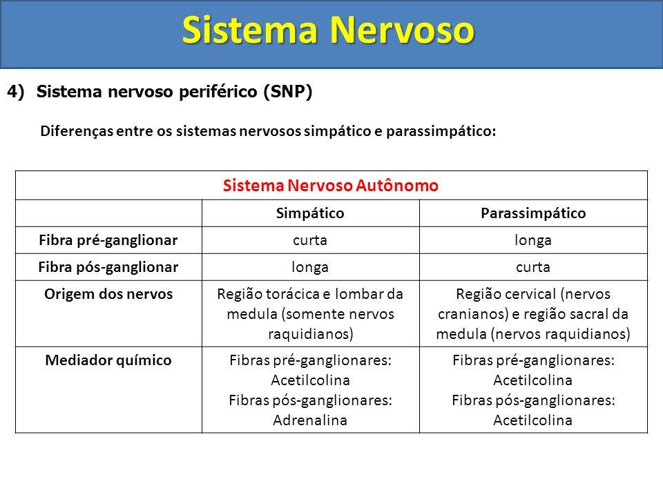 Sistema Nervoso 4) Sistema nervoso periférico (SNP) Diferenças entre os sistemas nervosos simpático e parassimpático: Sistema Nervoso Autônomo Simpáti