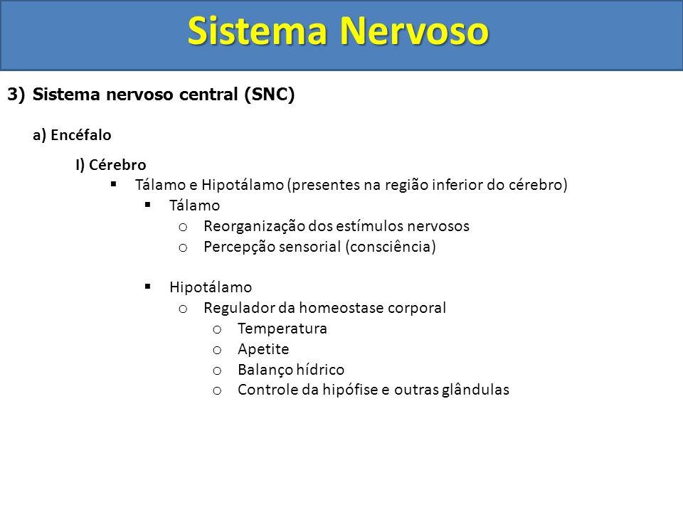Sistema Nervoso 3)Sistema nervoso central (SNC) a) Encéfalo I) Cérebro Tálamo e Hipotálamo (presentes na região inferior do cérebro) Tálamo o Reorgani