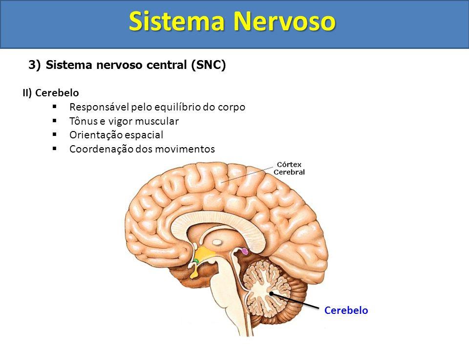 Sistema Nervoso 3)Sistema nervoso central (SNC) II) Cerebelo Responsável pelo equilíbrio do corpo Tônus e vigor muscular Orientação espacial Coordenaç