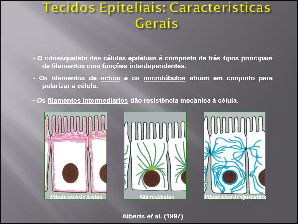 - O citoesqueleto das células epiteliais é composto de três tipos principais de filamentos com funções interdependentes. Alberts et al. (1997) - Os fi
