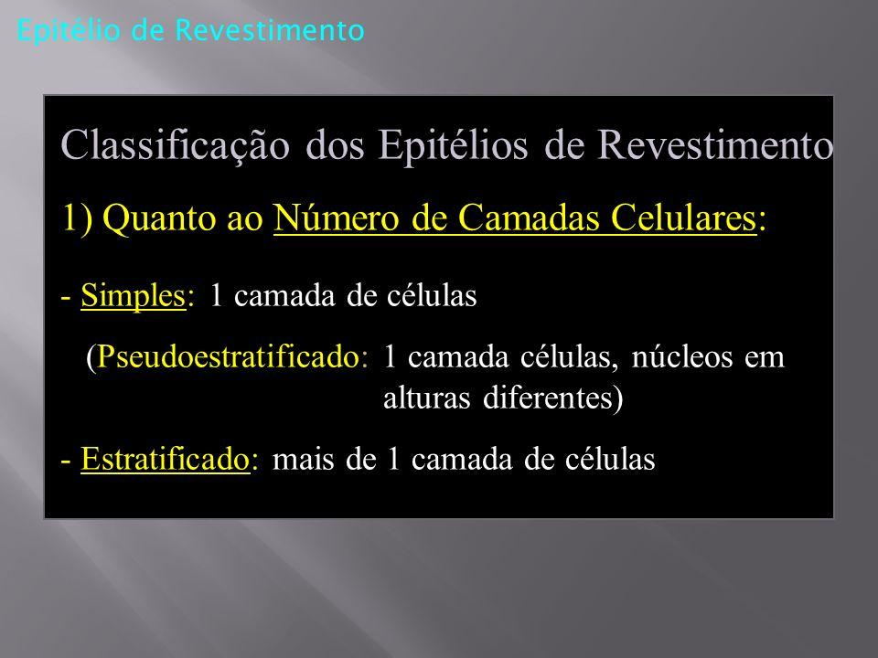 Epitélio de Revestimento Classificação dos Epitélios de Revestimento 1) Quanto ao Número de Camadas Celulares: - Simples: 1 camada de células (Pseudoe