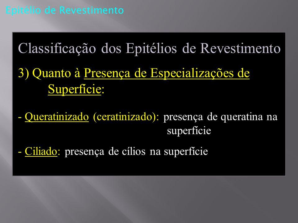 Classificação dos Epitélios de Revestimento 3) Quanto à Presença de Especializações de Superfície: - Queratinizado (ceratinizado): presença de querati