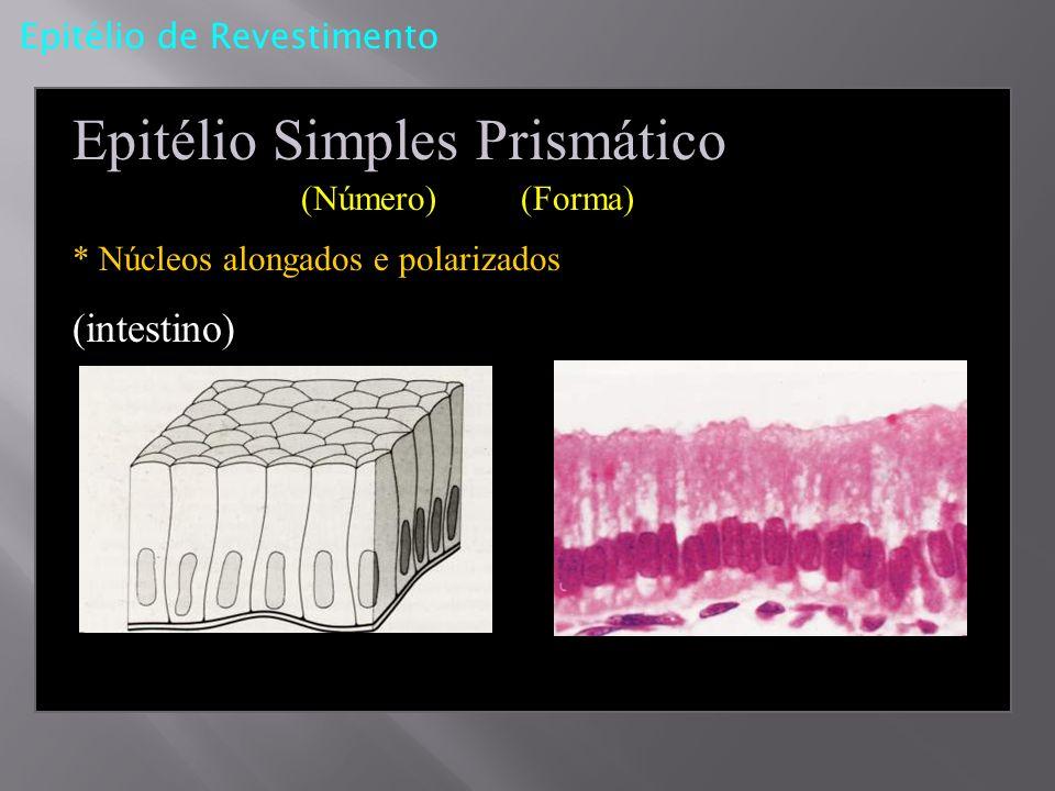 Epitélio de Revestimento Epitélio Simples Prismático (Número) (Forma) * Núcleos alongados e polarizados (intestino)