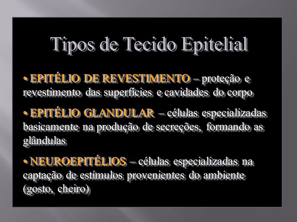 Tipos de Tecido Epitelial EPITÉLIO DE REVESTIMENTO – proteção e revestimento das superfícies e cavidades do corpo EPITÉLIO DE REVESTIMENTO – proteção