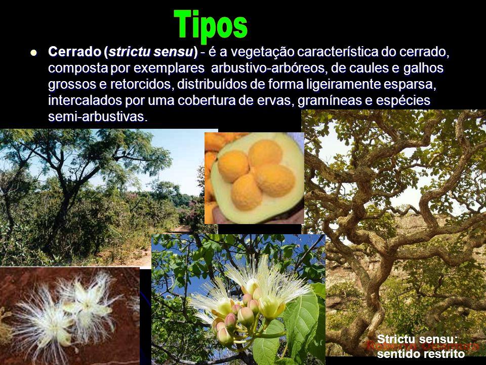 Cerrado (strictu sensu) - é a vegetação característica do cerrado, composta por exemplares arbustivo-arbóreos, de caules e galhos grossos e retorcidos