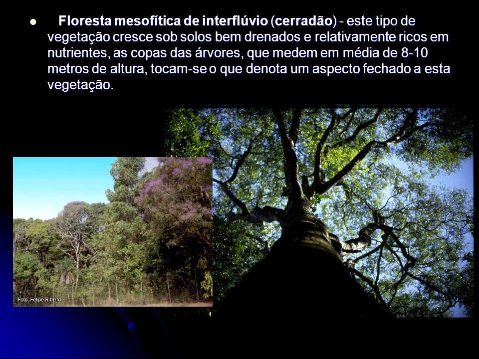 Floresta mesofítica de interflúvio (cerradão) - este tipo de vegetação cresce sob solos bem drenados e relativamente ricos em nutrientes, as copas das