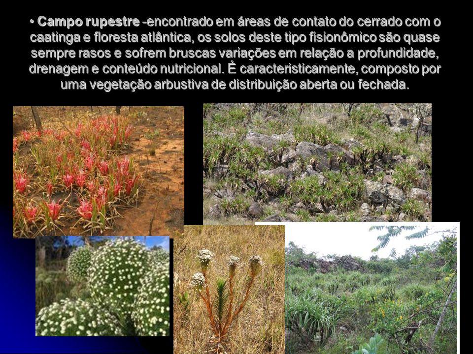 Campo rupestre -encontrado em áreas de contato do cerrado com o caatinga e floresta atlântica, os solos deste tipo fisionômico são quase sempre rasos