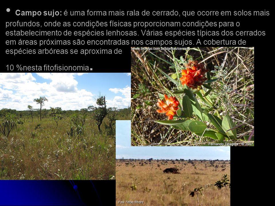Campo sujo: é uma forma mais rala de cerrado, que ocorre em solos mais profundos, onde as condições físicas proporcionam condições para o estabelecime