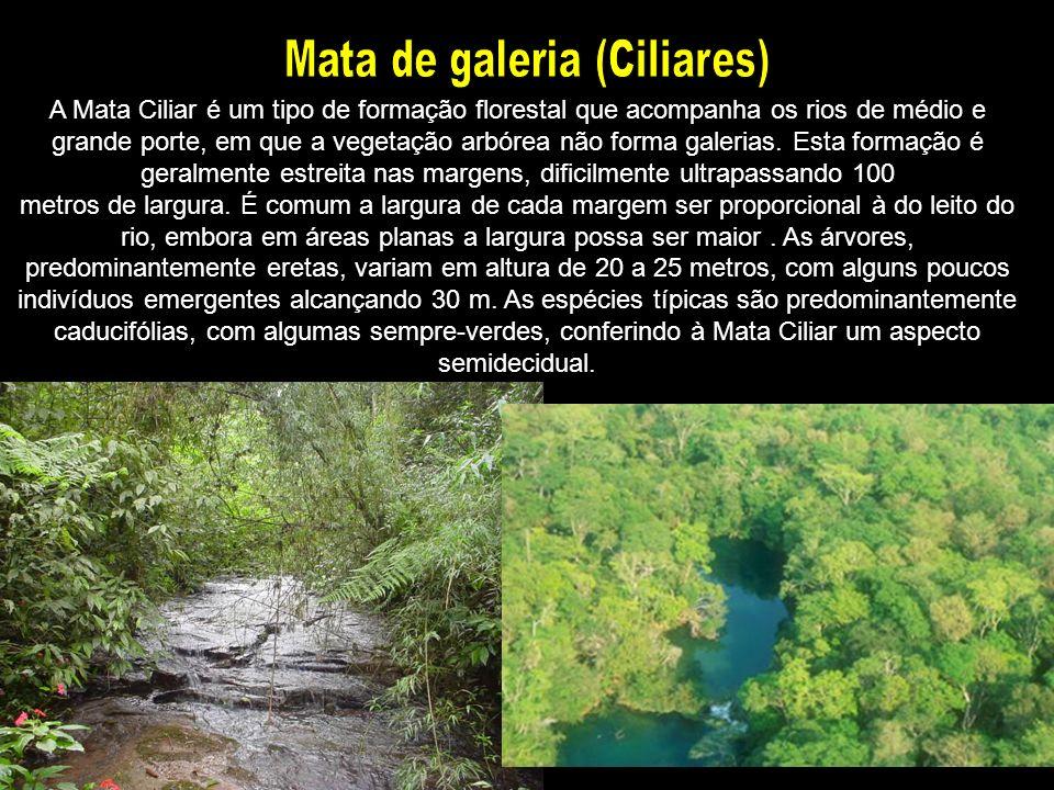 A Mata Ciliar é um tipo de formação florestal que acompanha os rios de médio e grande porte, em que a vegetação arbórea não forma galerias. Esta forma