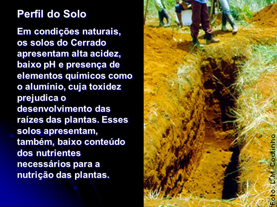 Perfil do Solo Em condições naturais, os solos do Cerrado apresentam alta acidez, baixo pH e presença de elementos químicos como o alumínio, cuja toxi