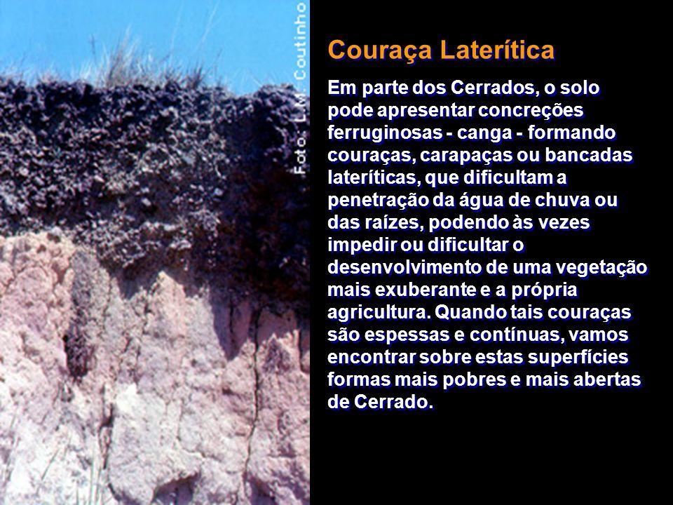 Couraça Laterítica Em parte dos Cerrados, o solo pode apresentar concreções ferruginosas - canga - formando couraças, carapaças ou bancadas laterítica