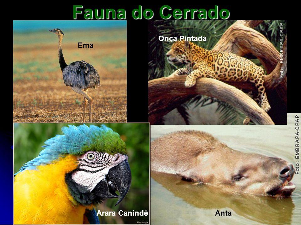 Fauna do Cerrado Anta Ema Onça Pintada Arara Canindé