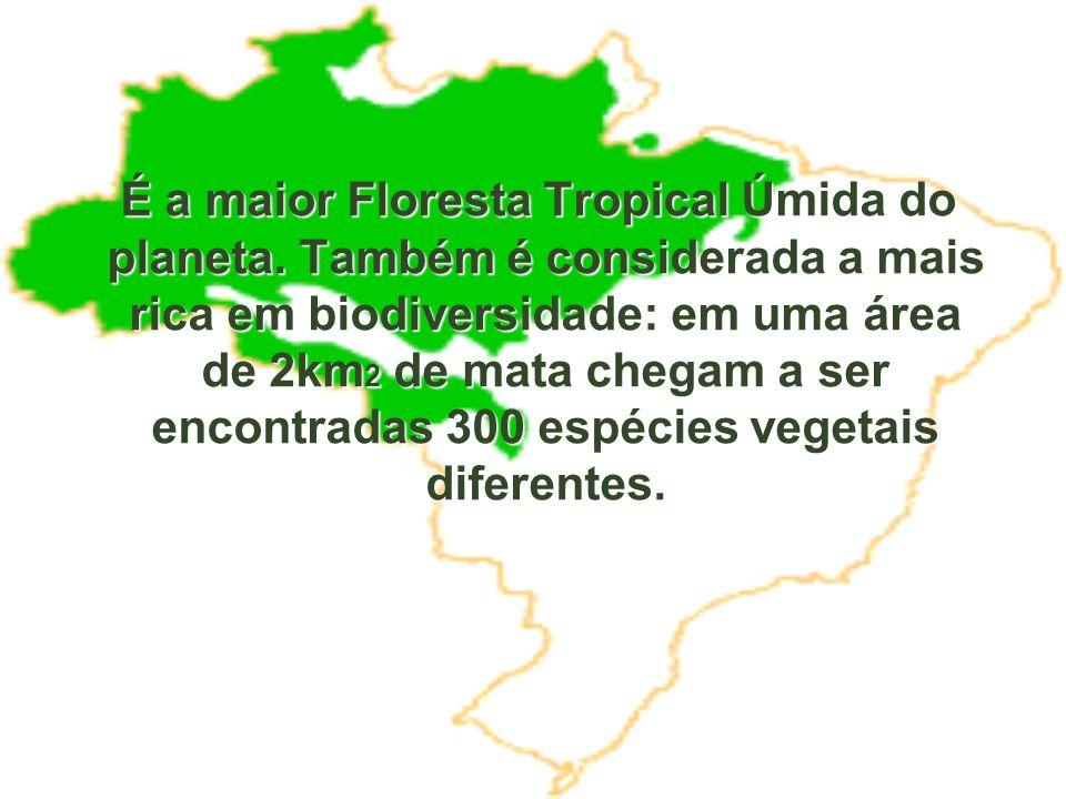 É a maior Floresta Tropical Úmida do planeta. Também é considerada a mais rica em biodiversidade: em uma área de 2km 2 de mata chegam a ser encontrada
