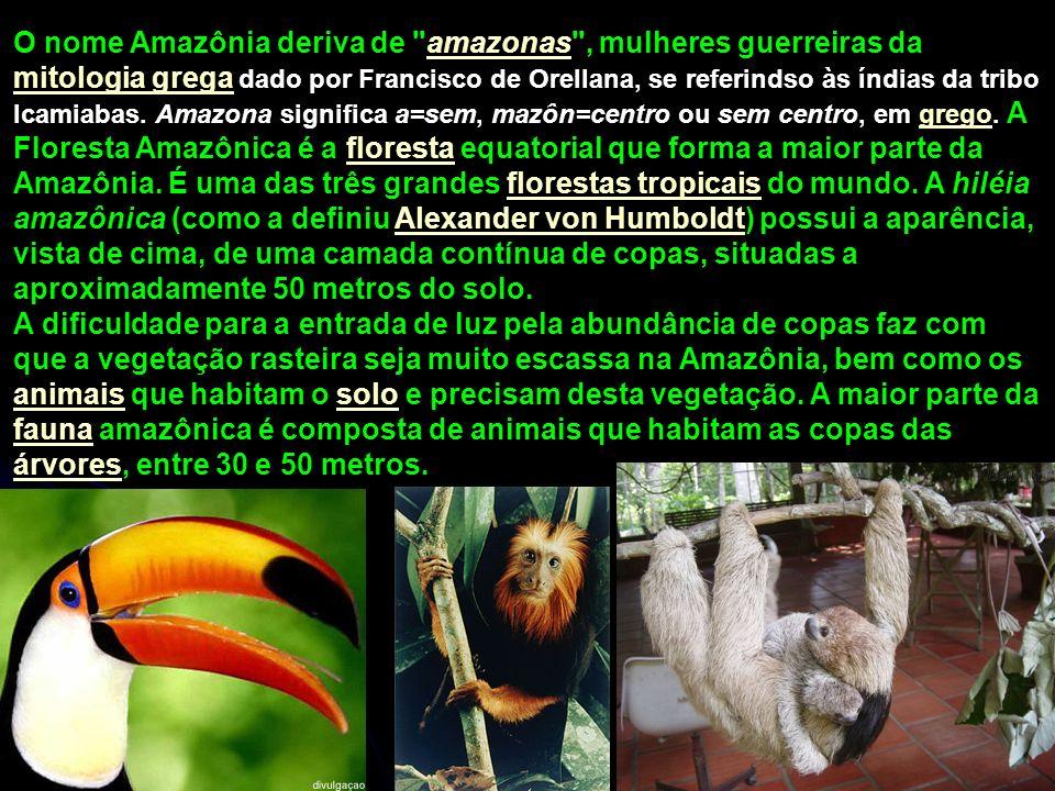 O nome Amazônia deriva de