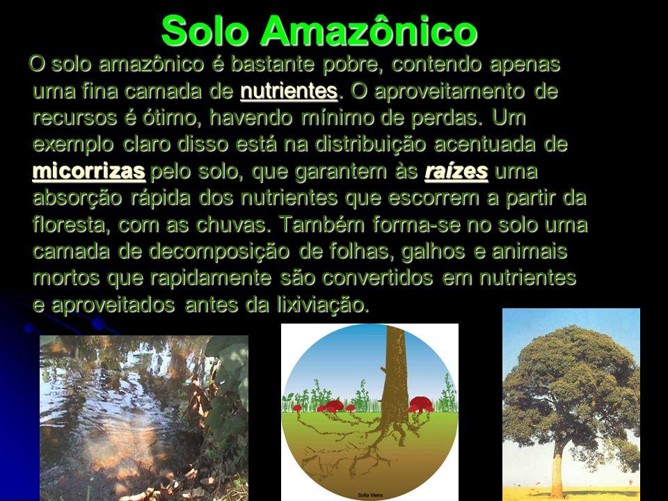 Solo Amazônico O solo amazônico é bastante pobre, contendo apenas uma fina camada de nutrientes. O aproveitamento de recursos é ótimo, havendo mínimo