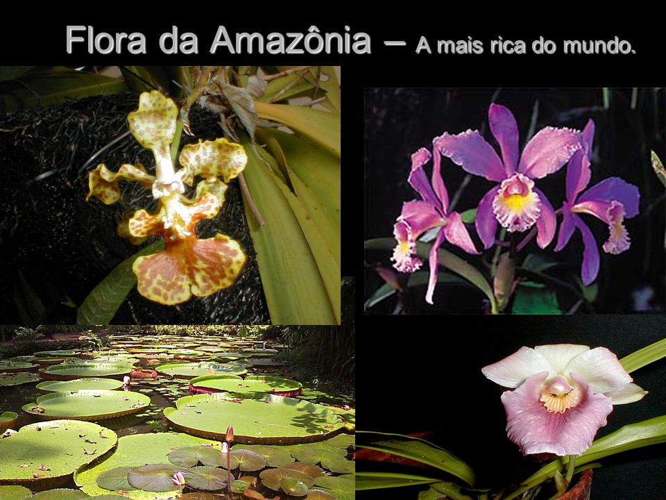 Flora da Amazônia – A mais rica do mundo.