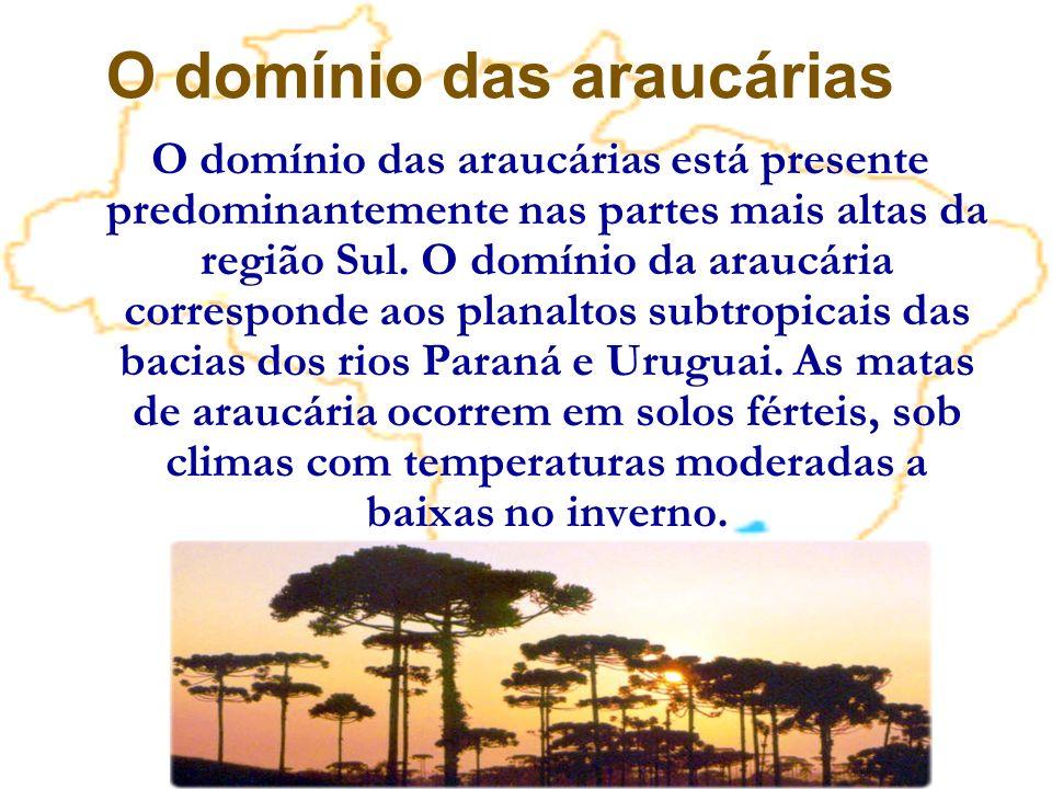 O domínio das araucárias está presente predominantemente nas partes mais altas da região Sul. O domínio da araucária corresponde aos planaltos subtrop
