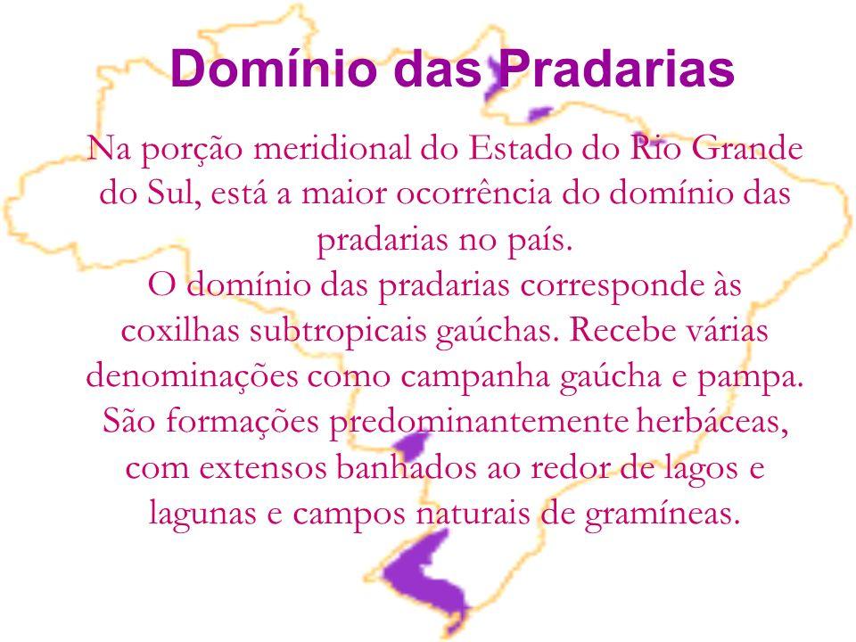 Na porção meridional do Estado do Rio Grande do Sul, está a maior ocorrência do domínio das pradarias no país. O domínio das pradarias corresponde às