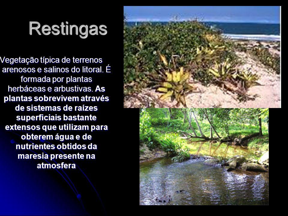 Restingas Vegetação típica de terrenos arenosos e salinos do litoral. É formada por plantas herbáceas e arbustivas. As plantas sobrevivem através de s
