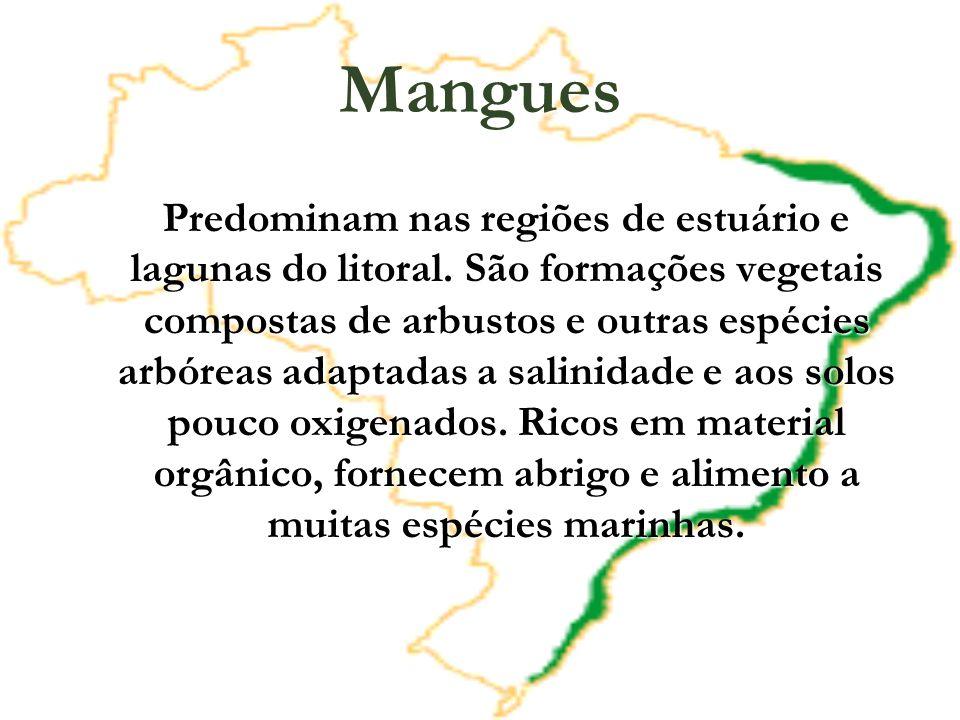 Mangues Predominam nas regiões de estuário e lagunas do litoral. São formações vegetais compostas de arbustos e outras espécies arbóreas adaptadas a s