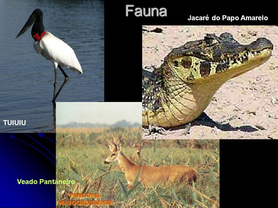 Fauna TUIUIU Jacaré do Papo Amarelo Veado Pantaneiro