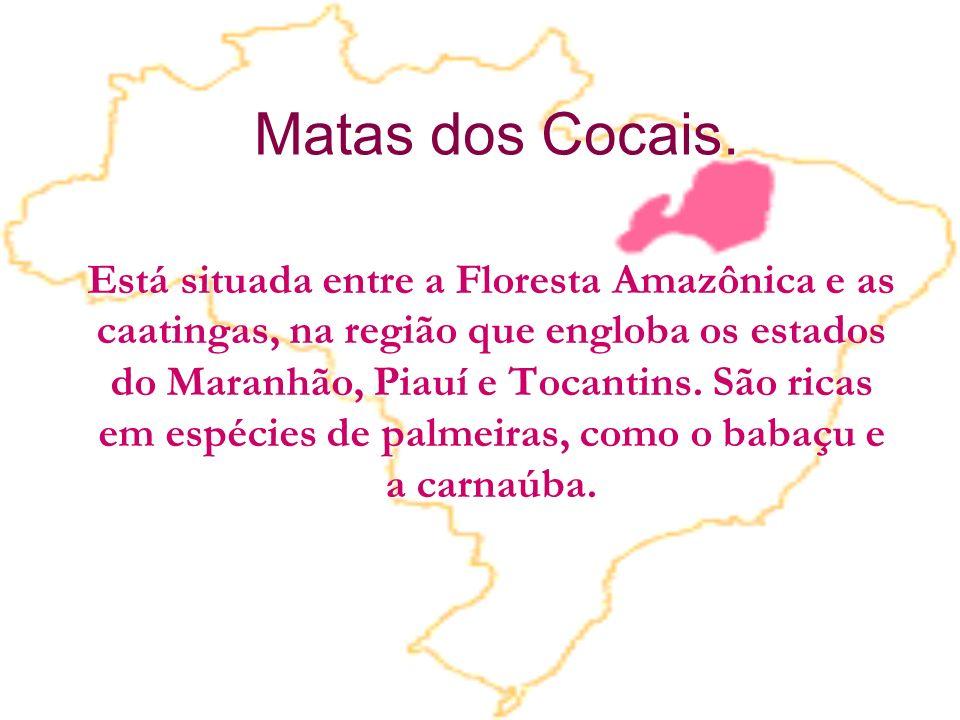 Matas dos Cocais. Está situada entre a Floresta Amazônica e as caatingas, na região que engloba os estados do Maranhão, Piauí e Tocantins. São ricas e