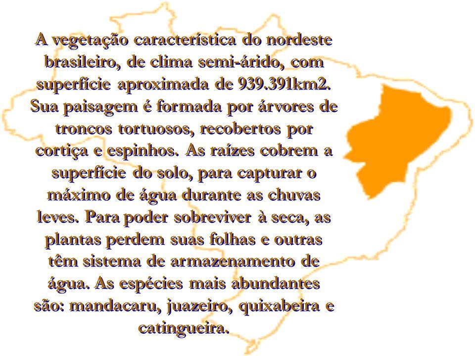 A vegetação característica do nordeste brasileiro, de clima semi-árido, com superfície aproximada de 939.391km2. Sua paisagem é formada por árvores de