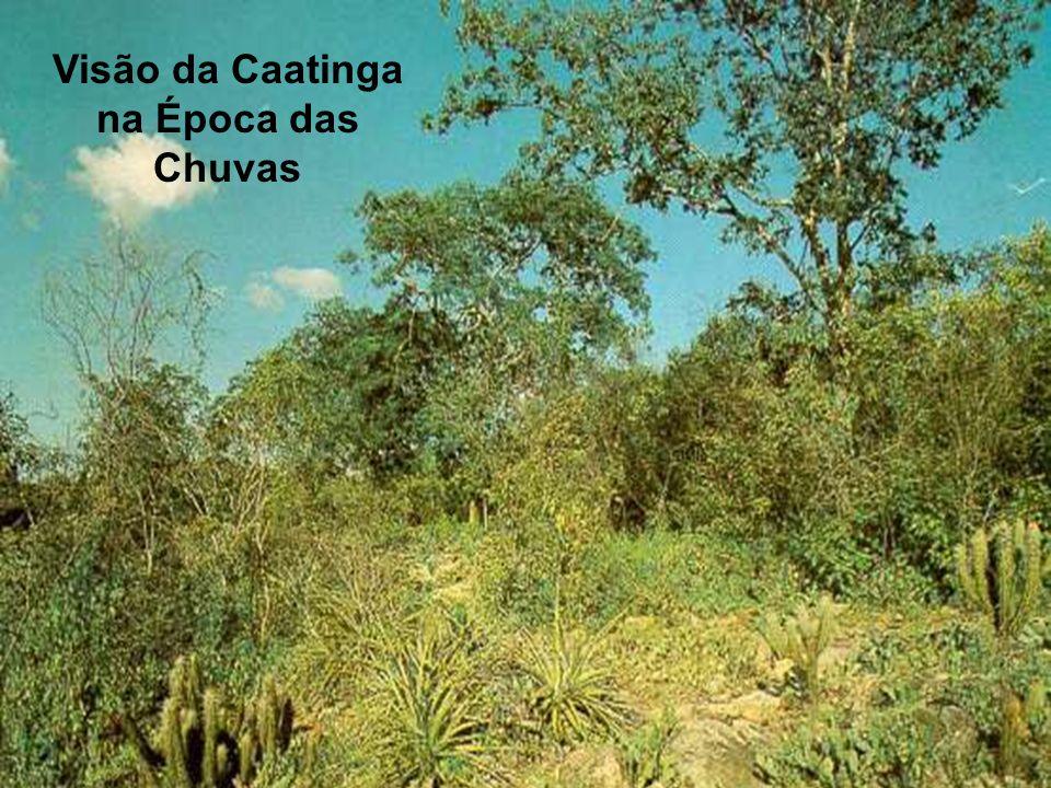 Visão da Caatinga na Época das Chuvas