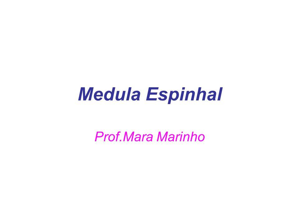 Medula Espinhal Prof.Mara Marinho