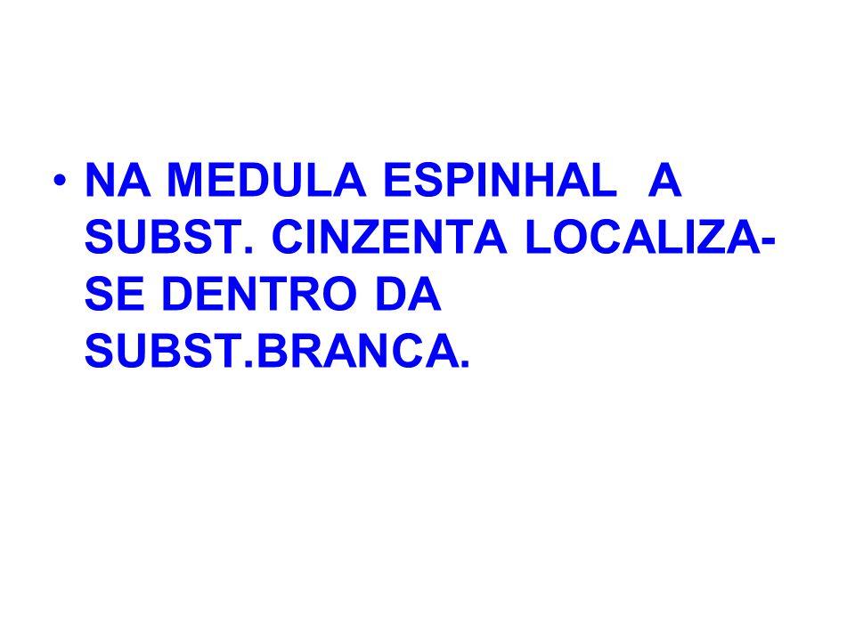 NA MEDULA ESPINHAL A SUBST. CINZENTA LOCALIZA- SE DENTRO DA SUBST.BRANCA.