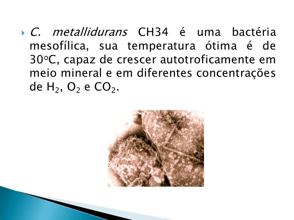 C. metallidurans CH34 é uma bactéria mesofílica, sua temperatura ótima é de 30 o C, capaz de crescer autotroficamente em meio mineral e em diferentes