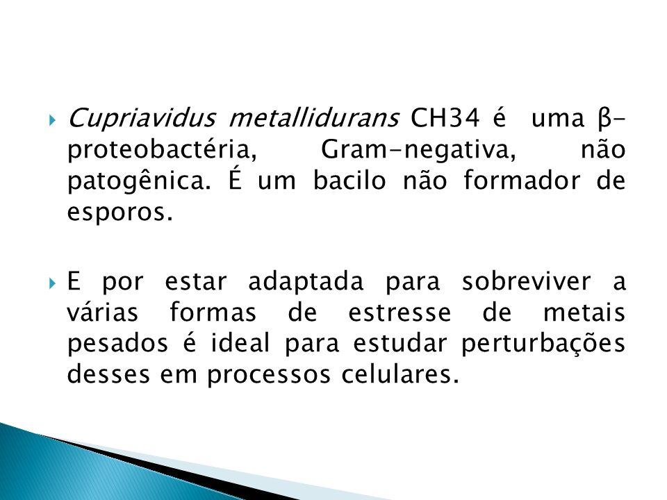 Cupriavidus metallidurans CH34 é uma β- proteobactéria, Gram-negativa, não patogênica. É um bacilo não formador de esporos. E por estar adaptada para