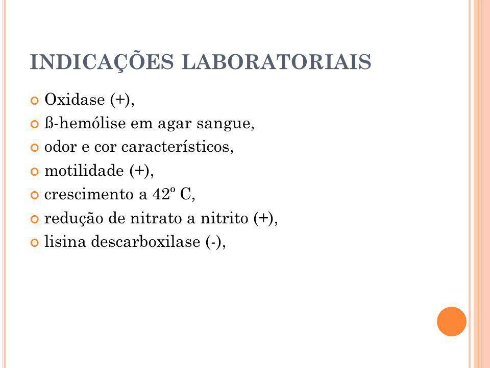 INDICAÇÕES LABORATORIAIS Oxidase (+), ß-hemólise em agar sangue, odor e cor característicos, motilidade (+), crescimento a 42º C, redução de nitrato a