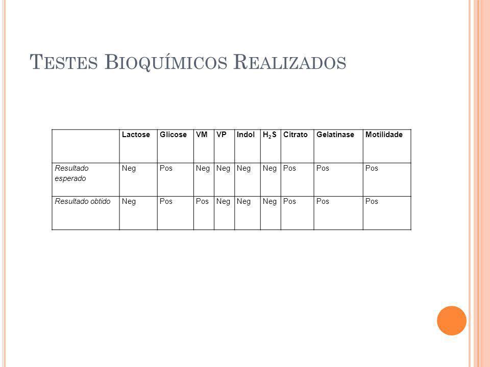 T ESTES B IOQUÍMICOS R EALIZADOS LactoseGlicoseVMVPIndolH2SH2SCitratoGelatinaseMotilidade Resultado esperado NegPosNeg Pos Resultado obtidoNegPos Neg