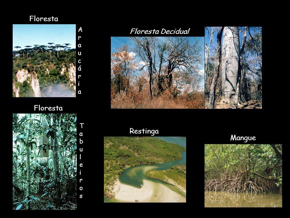 Mangue Restinga Floresta AraucáriaAraucária Floresta Decidual Floresta TabuleirosTabuleiros